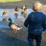 The Oliver's Visit White Post Farm