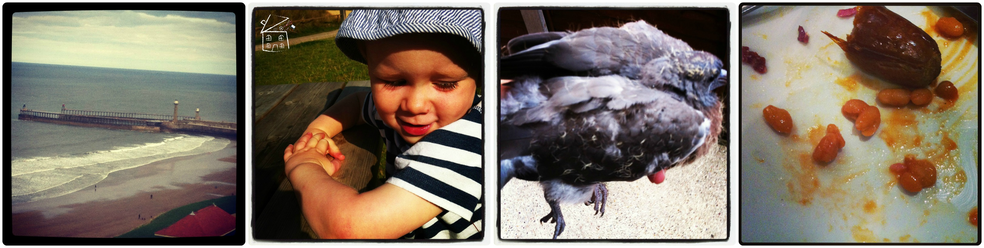 Whitby Harbour, Small Child, Baby Wood Pigeon, Cooked Breakfast