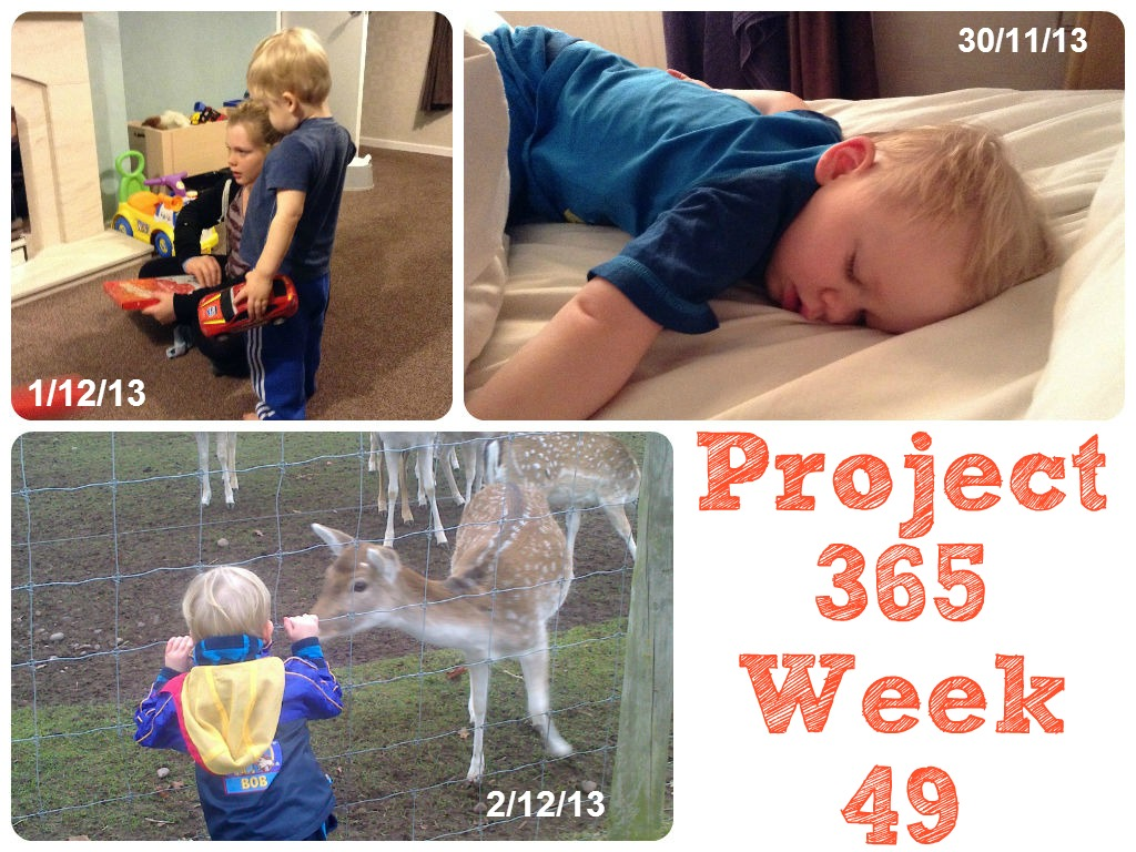 My Week That Was - Project 365 Week 49 The Oliver\\\'s Madhouse