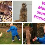Fresh Air and Farm Friends