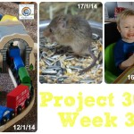 Project 365 Week 3 of 2014