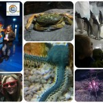 Review: National Sea Life Centre Birmingham