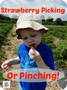 Strawberry Picking or Pinching The Oliver\\\'s Madhouse