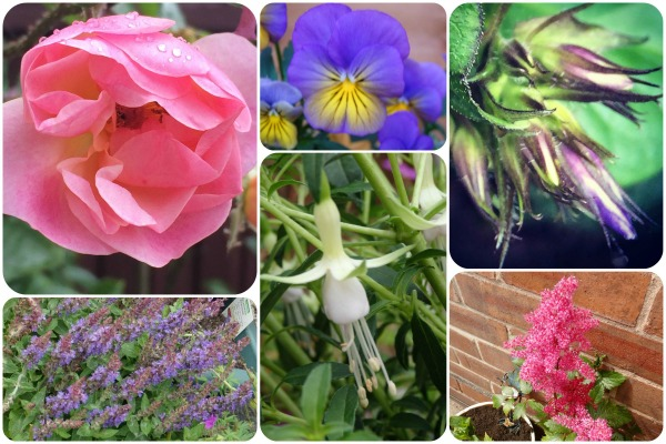 Am I Destined For Garden Greatness? The Oliver\\\'s Madhouse