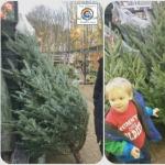 O Christmas Tree, O Christmas Tree …