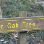 Sherwood Forest & The Major Oak – My Better Place