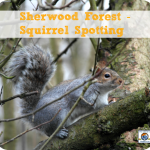 Sherwood Forest – Squirrel Spotting