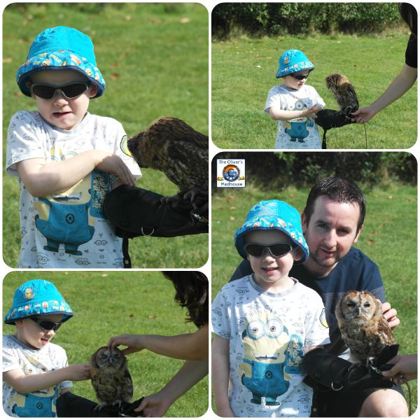 Meeting Feathered Friends At Rufford Park The Oliver\\\'s Madhouse