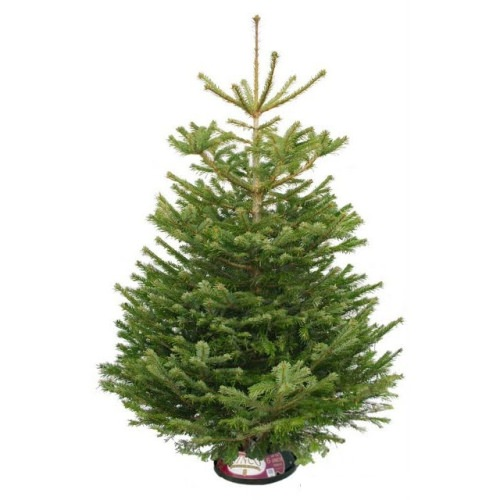 Christmas Countdown & Christmas Tree Discounts! The Oliver\\\'s Madhouse