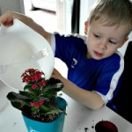 Indoor Planting With Lechuza