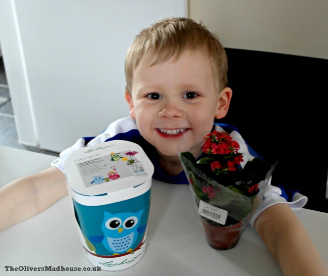 Indoor Planting With Lechuza The Oliver\\\'s Madhouse