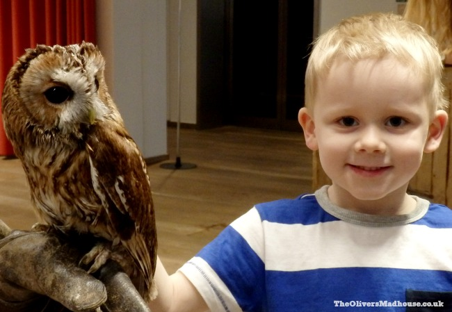 Joshua meeting an owl