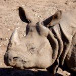 Discovering West Midlands Safari Park