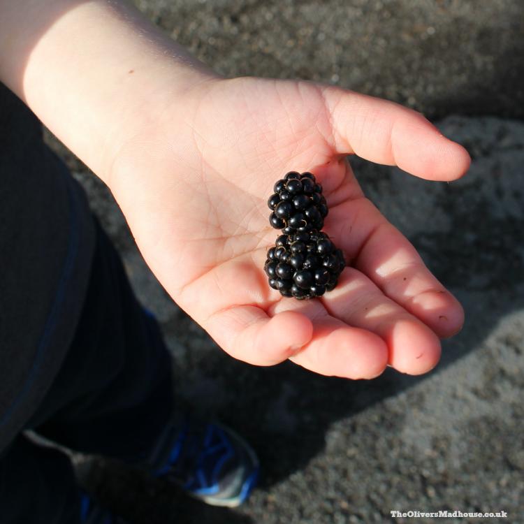 blackberries-in-hand