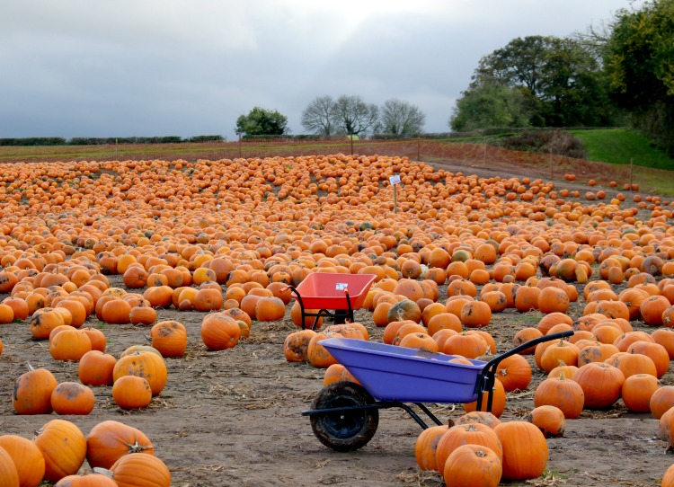 Fresh Air And Pumpkin Picking The Oliver\\\'s Madhouse