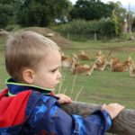 Raising Them Ready And A Trip To Yorkshire Wildlife Park